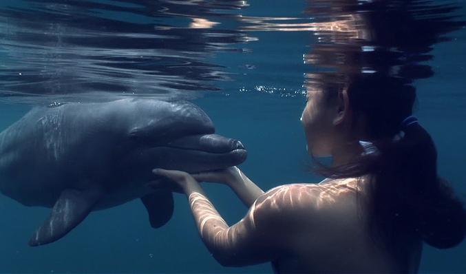 Opiniones de Actividades con delfines, tiburones y leones marinos