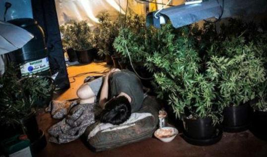 esclavos-vietnamitas-y-chinos-en-las-plantaciones-españolas-de-marihuana