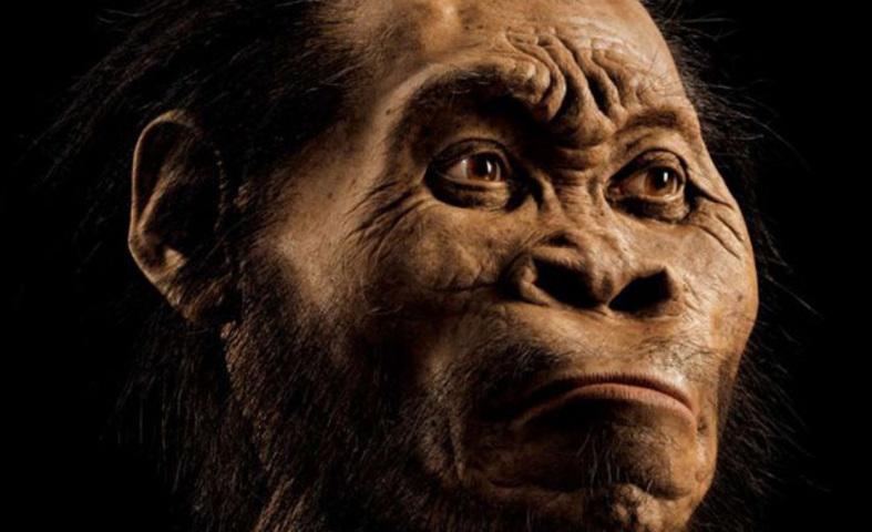 no seas neandertal y otras historias sobre la evolucin humana