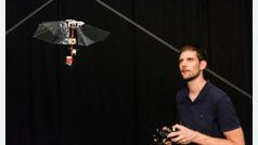 Un robot volador imita casi a la perfección las acrobacias de la mosca de la fruta