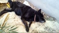 Encuentran a dos perros moribundos en una caseta de campo