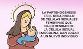 Protoon 37: Inmaculada Concepción