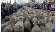 La Casa de Campo de Madrid contará con un rebaño de 600 ovejas