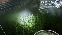 La Policía Municipal descubre un bar abierto en La Cañada que escondía una plantación de marihuana