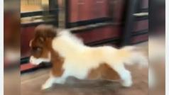 La alegría de este poni cuando consigue volver a andar