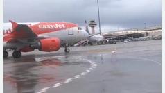 Un flamenco se pasea por la pista de aterrizaje del aeropuerto