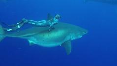 Un gran tiburón blanco es filmado en aguas de Hawai