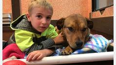 Un niño de 7 años, un héroe para más de 1.200 perros