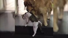 Un perro aparta a un gato de una pelea de felinos