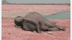 La Tierra tiene 60% menos animales salvajes que hace 44 años