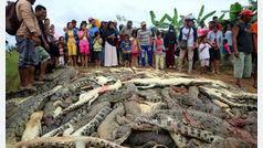 Masacran a cerca de 300 cocodrilos en Indonesia en venganza por la muerte de un vecino