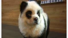 Un polémico local de China tiñe a sus perros