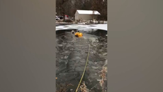 Salva la vida de un perro que cayó a un estanque de agua helada