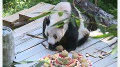Fiesta por todo lo alto para el panda más longevo del mundo