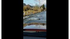 ¿Por qué estos salmones cruzan la carretera?