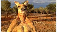 Muere Roger, el famoso canguro culturista