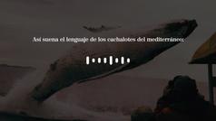 Así suena el lenguaje de los cachalotes del mediterráneo