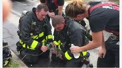 Unos bomberos salvan milagrosamente la vida de una gata