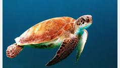 Un millón de especies en peligro de extinción por culpa del ser humano