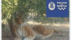 El hilarante desenlace del susto de un murciano al avistar un tigre bajo un árbol