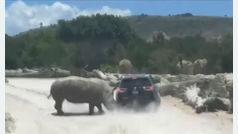 Un rinoceronte embiste a una familia en un safari en México