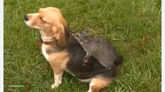 Tierna amistad entre perrita abandonada y zarigüeya
