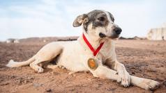 Cactus, el perro que ha acabado una de las maratones más duras del mundo