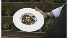 Recetas sencillas y saludables: salteado de setas de temporada