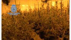 La Policía Nacional desarticula un grupo delictivo dedicado al cultivo 'indoor' de marihuana