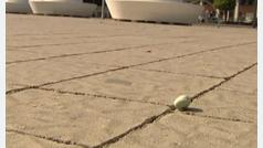 Hasta 3000 euros de multa por tirar un chicle al suelo