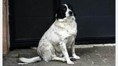 Kupata, el perro callejero que vela por la seguridad de los niños