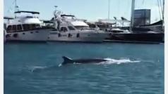 Ballena avistada en La Marina de València