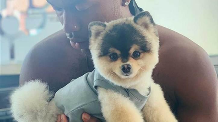 Daniel Sturridge reunited with his dog in Los Angeles