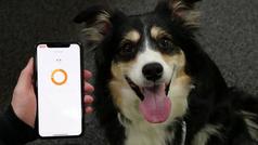 Un collar para perros desarrollado en Corea del Sur informa sobre su estado de ánimo