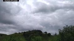 Las impresionantes imágenes de la lluvia de arañas en Brasil