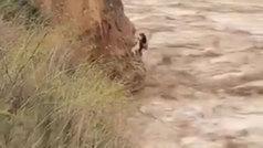 La Guardia Civil rescata a un perro atrapado por las inundaciones