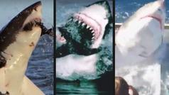 Los 10 mejores saltos de tiburones blancos jamás vistos en el mar