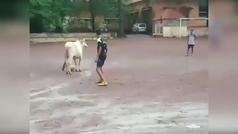 Cuando una vaca se cuela en tu pachanga de amigos... ¡y nadie se atreve a quitarle el balón!