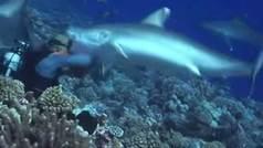Seis tiburones rodean a un buceador y uno le arranca la máscara de un mordisco
