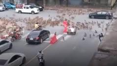 La batalla entre dos bandas de monos rivales... ¡que paralizó el tráfico en Tailandia!