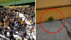 ¡Una planta de marihuana crece en el estadio de Peñarol!