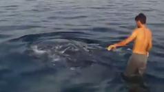 Hace surf encima de un tiburón ballena
