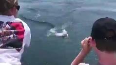 ¡Un tiburón blanco le roba la pesca a una familia!