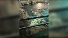 Un hombre se desnuda y se mete en un acuario lleno de tiburones