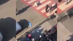 Un perro callejero regula el tráfico en Georgia