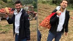 El convaleciente Djokovic se graba recolectando y cargando sacos de patatas