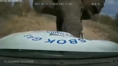 Un elefante enfurecido embiste una camioneta en una reserva de Sudáfrica