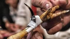 Un hombre muere al ser herido con una cuchilla de acero por su gallo de peleas ilegales
