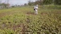Pakistán moviliza al Ejército para luchar contra la peor plaga de langostas en décadas