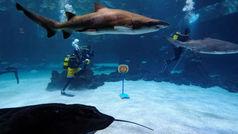 El Gran Canaria presenta a Shurna ¡entre tiburones!